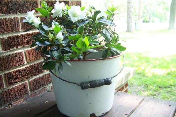 Iskoristite stare stvari za uređenje vrta