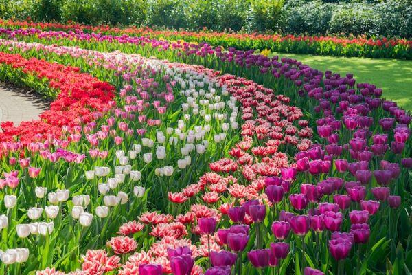 Keukenhof vrt i slavne holandske lale - Moj Enterijer – Kupatila ...