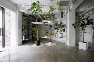 Velika žičana polica svakoj biljci daje priliku da zasija punim sjajem